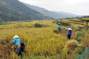Chính sách đất nông nghiệp:Thúc đẩy phương thức sản xuất tiên tiến