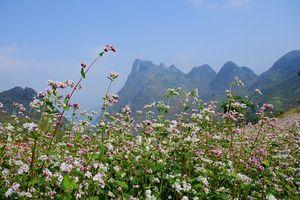 Sắp tổ chức Lễ hội 'Cao nguyên đá rạng rỡ những mùa hoa'
