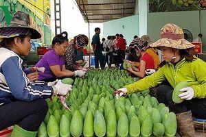 Sơn La xuất khẩu nông sản 10 tháng vừa qua tăng gấp đôi cả năm 2017