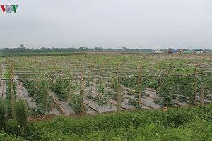 Nhiều rào cản phát triển thị trường đất nông nghiệp
