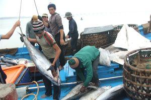 'Thẻ vàng' là cơ hội để Việt Nam phát triển nghề cá bền vững