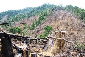 Phiên tòa cho các đối tượng phá rừng phòng hộ tại Quảng Nam