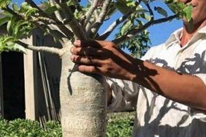 Trai Sa Đéc kiếm bộn tiền nhờ làm cây sứ 'chân dài tới nách'