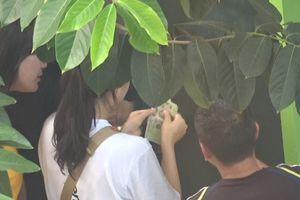 Lộ diện nhóm đối tượng trấn lột khách du lịch ở hồ Hoàn Kiếm