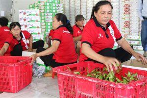 Tìm giải pháp để nông sản Việt không bị 'cướp' thương hiệu tại nước ngoài