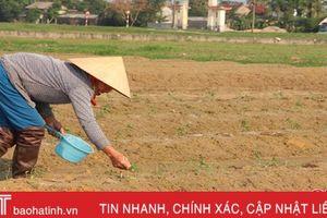 Sau Đức La, doanh nghiệp mở rộng liên kết trồng ớt sang Thạch Môn