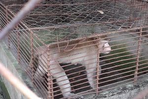 Thực hư thú nuôi bị ngược đãi ở Công viên nước Củ Chi