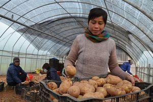 Nông nghiệp Thủ đô tiệm cận mốc 2 tỉ USD