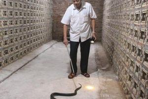 Một Hợp tác xã nuôi đàn rắn hổ mang cực độc lên tới 30.000 con