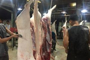 Giá heo hơi hôm nay 1/11: Đầu tháng giá lợn hơi giảm trên diện rộng