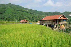 Quảng Ngãi: Dân vùng sạt lở vẫn chưa an cư