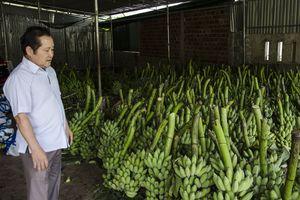 Cầu nối hữu nghị thông qua mô hình liên kết phát triển nông nghiệp