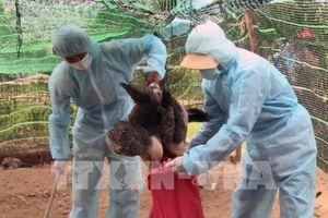 Phát hiện ổ dịch cúm gia cầm H5N6 có khả năng lây sang người