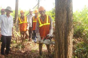 Nơi từ bỏ trồng rừng gỗ nhỏ
