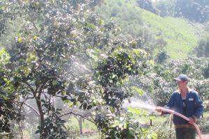 Người 'mang' vườn trái cây Nam Bộ ra Quảng Nam