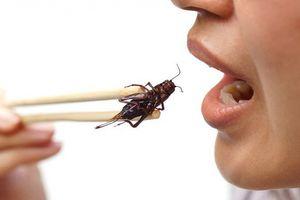 Bà bầu và hiểm họa khôn lường từ trào lưu ăn côn trùng sống
