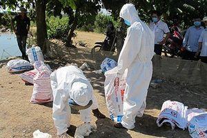Dịch cúm gia cầm H5N6 có khả năng lây sang người: Cần làm ngay điều này để phòng tránh