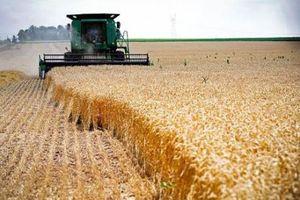 Nông sản Mỹ ảnh hưởng do các biện pháp trả đũa từ Canada và Mexico