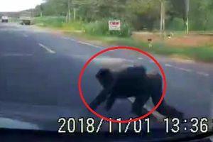 Clip: Người đàn ông lao ra trước đầu ô tô ăn vạ khiến tài xế 'đứng tim'