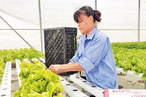 Đa Tốn: Khẳng định thương hiệu nhờ trồng rau thủy canh