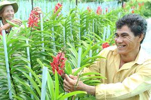 Tái cơ cấu để nâng cao thu nhập cho nhà nông