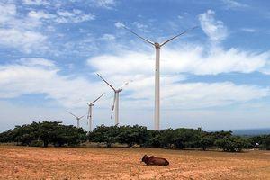 Đến Ninh Thuận 'hóng' chuyện điện gió