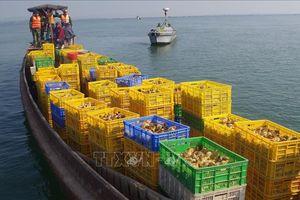 Bắt giữ 50.000 con gà giống nhập lậu chuyển từ Trung Quốc về Việt Nam