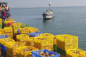 Quảng Ninh: Bắt giữ, tiêu hủy 50 nghìn con gà giống nhập lậu bằng đường thủy