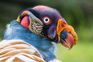 Giải bí ẩn về những loài chim kỳ dị như sinh vật ngoài hành tinh
