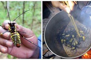 Rùng mình món nhện rừng đặc sản ở Bình Thuận