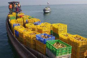 Quảng Ninh: Bắt giữ 50.000 con gà giống Trung Quốc nhập lậu