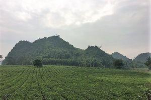 Sơn La: Gỡ vướng trong quản lý, sử dụng đất của hợp tác xã