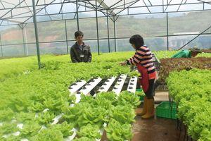 Trình độ sản xuất nông nghiệp công nghệ cao đã tương đương Thái Lan, Malaysia