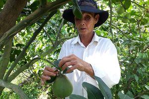 Tiền Giang: Đổi mới sản xuất nông nghiệp gắn với xây dựng nông thôn mới