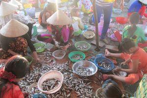 Cá ào ra sông cuối mùa nước nổi miền Tây, ngư dân lại kiếm thêm tiền
