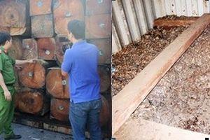Phát hiện số lượng lớn vảy tê tê 'độn' trong container gỗ quý