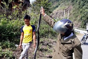 Người dân hò nhau bắt con rắn hổ mang dài hơn 2m bò giữa đường