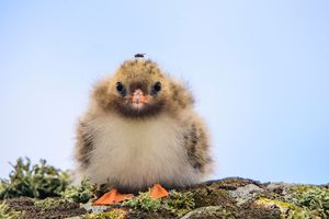 16 hình ảnh động vật nhỏ xinh giúp thổi bay một ngày âm u của bạn