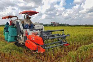 Năm 2018, trồng lúa thắng lợi toàn diện