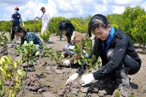 Bà Rịa - Vũng Tàu: Trên 100 tỷ đồng phục vụ trồng rừng