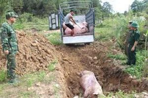 Nguy cơ dịch tả lợn Châu Phi vào Việt Nam: Lãnh đạo Bộ NNPTNT ráo riết lên tận tỉnh biên giới phía Bắc thị sát