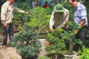 Đà Nẵng: Nông dân theo nghề trồng hoa cây cảnh cho thu nhập cao
