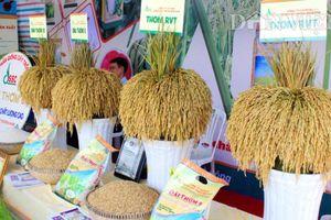 Lần đầu tiên công bố logo thương hiệu gạo Việt