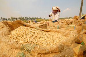 'Logo thương hiệu gạo Việt' sẽ công bố vào giữa tháng 12
