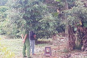 Chủ tịch xã tử vong trong tư thế treo cổ trên cây sầu riêng