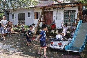 'Hoa trong phố' ở phường Ngọc Hà
