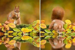 Khoảnh khắc tuyệt đẹp của động vật trong sắc thu vàng