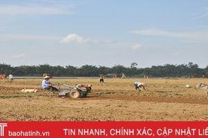 Hà Tĩnh hoàn thành gieo trỉa 77,9% diện tích vụ đông 2018