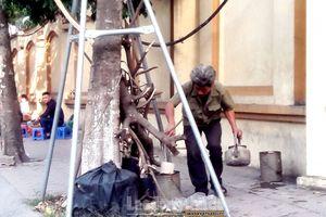 Xin đừng 'bức hại' cây xanh