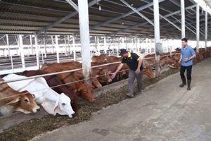 Sóc Trăng: Hạn chế các tác động xấu đến môi trường trong hoạt động chăn nuôi